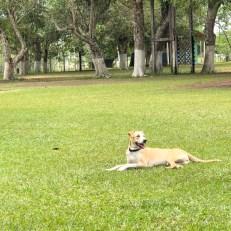 pacha relaxing