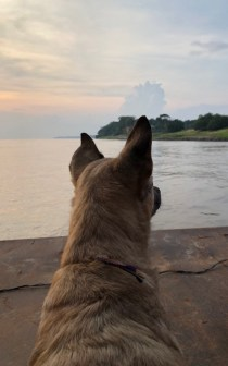river dogs nica watching