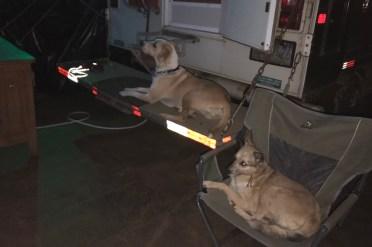 river dogs on gaurd.JPG
