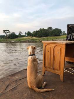 river dogs pacha watching