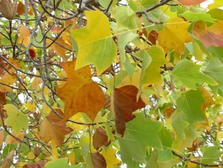 tree-in-fall