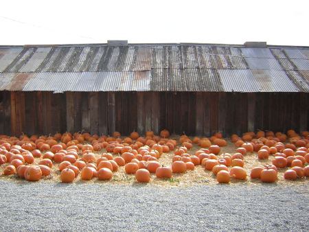 Pumpkinbarn