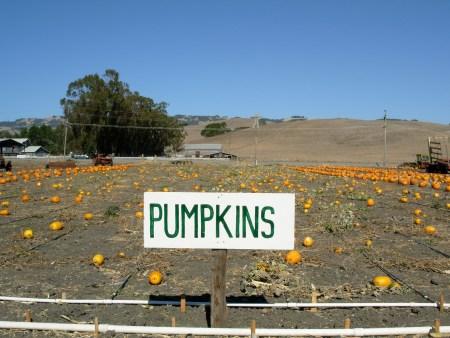pumpkinsign