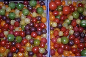 Tomaten aller Farben
