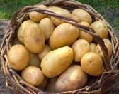 cesto patate