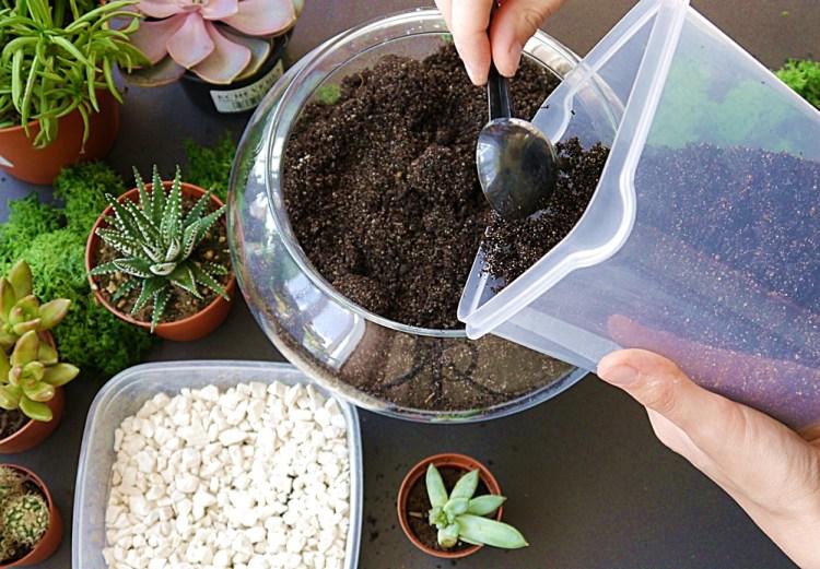 terrarium na sukulenty