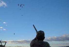 caza de patos