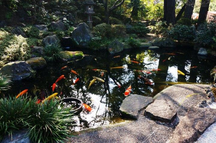 尊鉢厄神 池の鯉