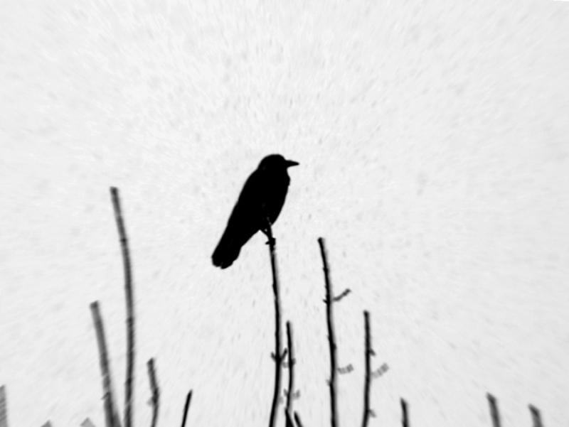 Slow Muse · Zen poetry
