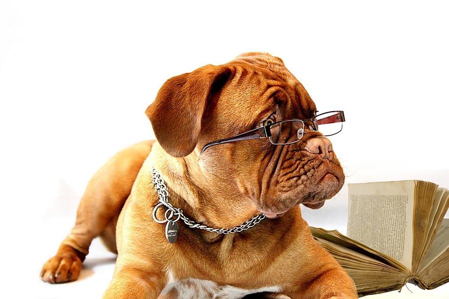 안경 쓴 강아지