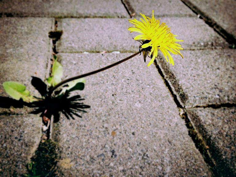 희망 꽃 용기 바람 소망