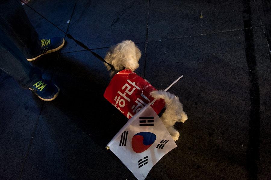 박근혜 하야 (사진 제공: 옥토)