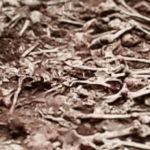여양리 학살 사건: 가해자가 훈계하고, 피해자는 숨죽이는 역사