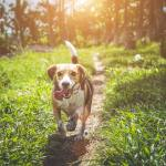 czego może nauczyć pies