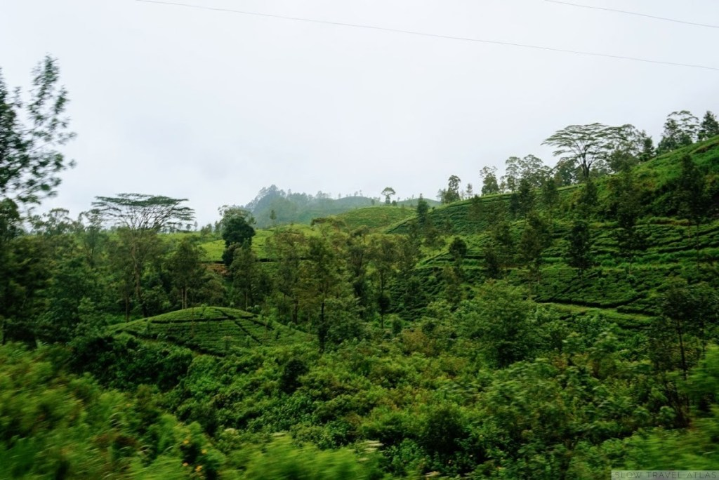 Sri Lanka countryside with tea plantations