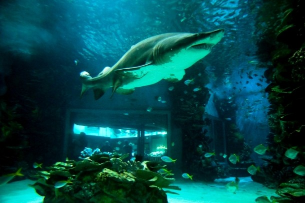Facing_sharks_in_Aquarium6