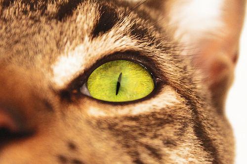 Un gato de ojos amarillos  ConcurSlow Microrrelatos