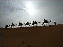 Caravana camellos