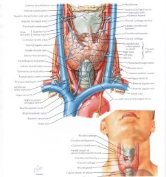 protected normal anatomy of the vocal mechanism 68 [ 2480 x 3228 Pixel ]