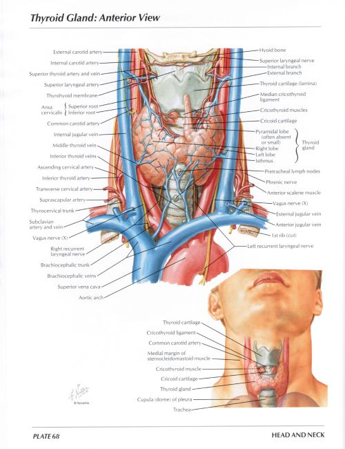 small resolution of protected normal anatomy of the vocal mechanism 68