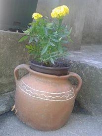 stari cup