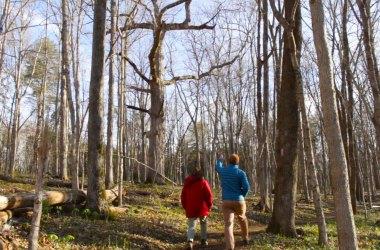 Paw Paw Trail