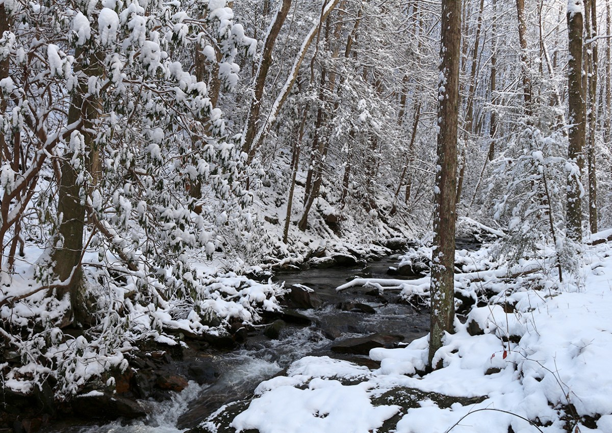 Hickory Creek Trail, Cohutta Wilderness, Slucherville