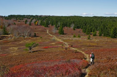 Backpacking the Dolly Sods Wilderness