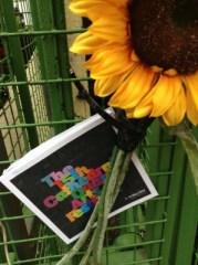 CQAF 2014 programme sunflower