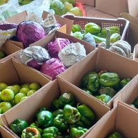 Why Igorots in Metro Manila source goods directly from farmers