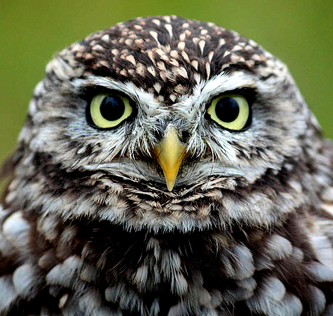 To dissect lions / You need lightning / For little owls you need / Forget- / fulness.