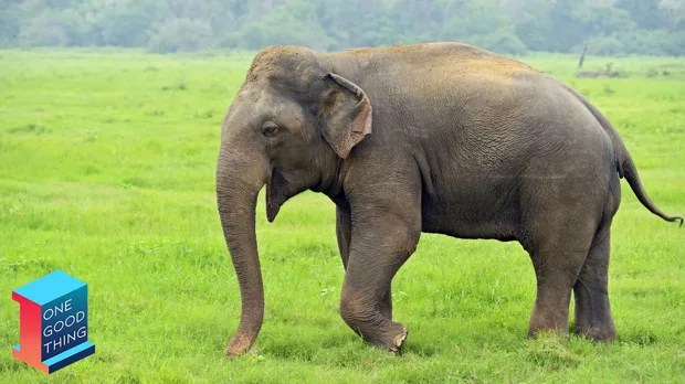 India S First Elephant Hospital Has Opened And People Are Rejoicing Social Good