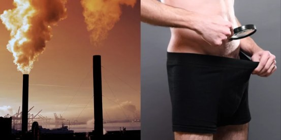It is obvious that pollution reduces the human penis