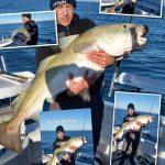 30 kg torsk taget ved Hirtshals