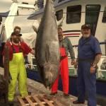 Årets største tun fanget i Skagerak