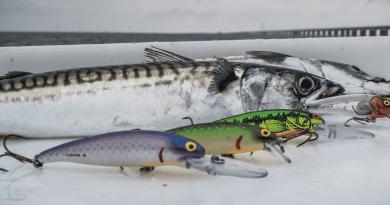 Bomber til stor-makreller