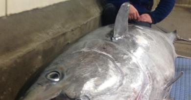 Team Blikfang gjorde det ! Se den danske stangfangede tun fanget blot 17 sømil fra Skagen
