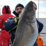 Kæmpe Øresunds-torsk på 22,3 kg.