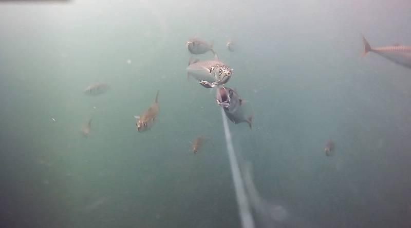 Undervandskamera med udvidede features til lystfiskere