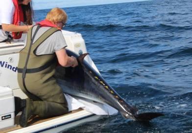 Samarbejde om en dansk tunkvote til lystfiskere !