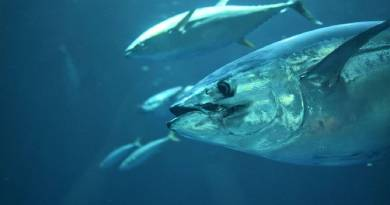 Sponsorer til tunmærkningsprojektet søges
