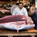 Blåfinnet tunfisk solgt for millioner i Japan