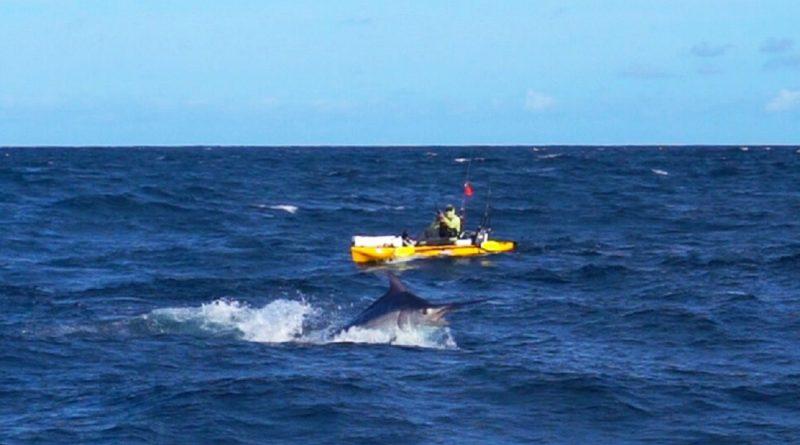 Kajak-fisker fighter rekord-marlin over 6 timer og slæbes 13 sømil til havs