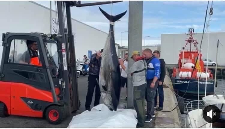 Første danske lystfiskerfangede tunfisk på kvote i 50 år er netop landet!