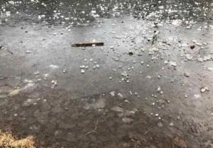 氷っている池