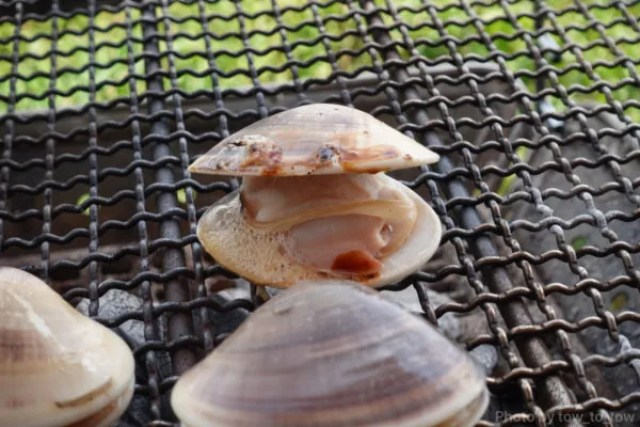 ふもとっぱら ソロキャンプ  蛤