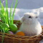 Early Easter, Cold and Snow Hurt April Retail Sales, Report Says