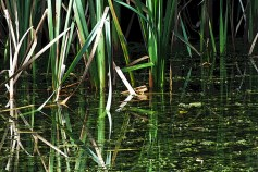 Reflective reeds