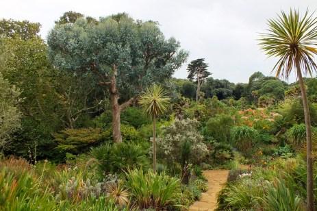 Sub-tropical plants