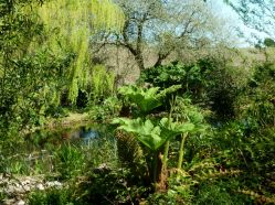 Ponds and boggy area